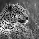 Okavango Embers