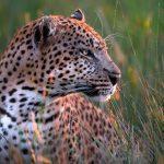 Okavango Embers (colour)